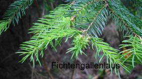 20101112141714_fichtengallenlaus-m.282x158-crop.png